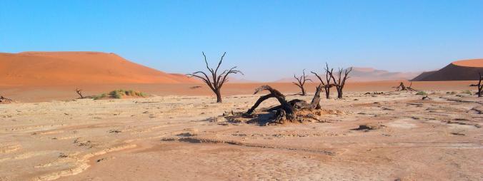 desert of life.jpg