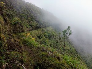 white road hike, waipio valley, kohala forest reserve, kamuela, the big island