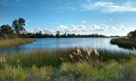Lake Miramar Hiking Trail Guide