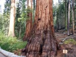Mariposa Grove Of Giant Sequoia, Hiking, Yosemite National Park, Sequoias, Trail Description