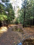 Mirror Lake, Hiking Trail, Yosemite National Park, Trail Guides