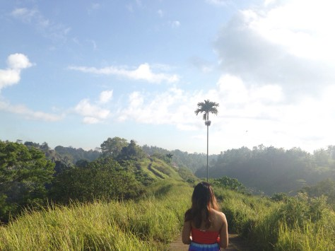 Free and easy nature trek. Located at the central highland town of ubud. Location : Campuhan Ridge Walk, Ubud, Bali