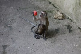 This monkey had a baby I think that's worth sharing
