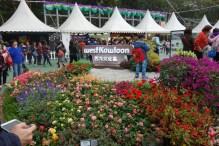 Random Flower Festival??