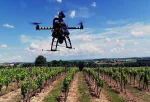 drone-vigne_6