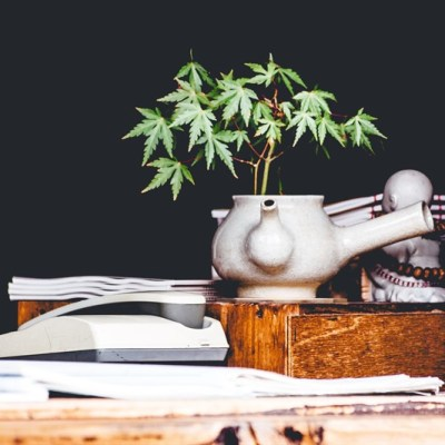 Career Change & Cannabis