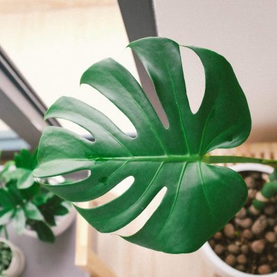 13 Tips To Help Your Houseplants Thrive (and not just survive)