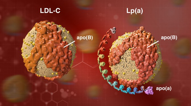 "Should You Get Tested For Lipoprotein(a), The ""Hidden"" Risk Factor For Cardiovascular Disease?"