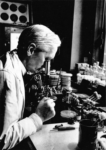 alexander fleming at work