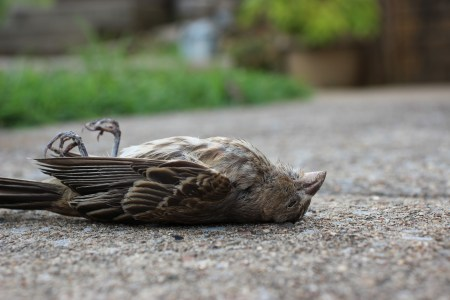 dead bird on ground