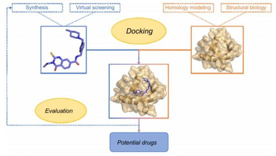 docking diagram modeling drug design