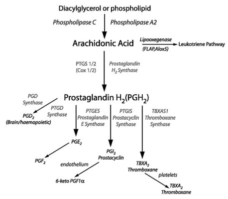 prostaglandinpathway