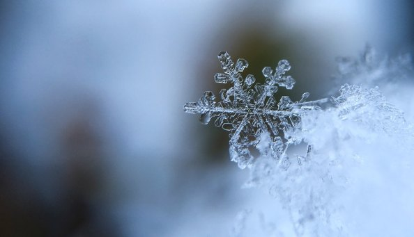 ice snow hibernation hypothermia cold cooling