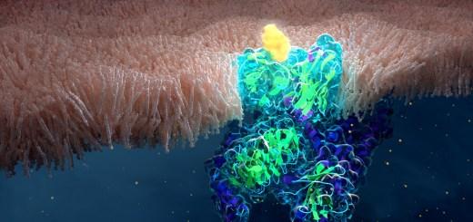 GPCR membrane bound receptor ligand