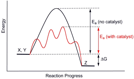 classic diagram catalyst lowering activation energy