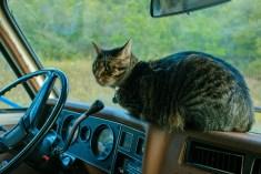 Gonzo Cat