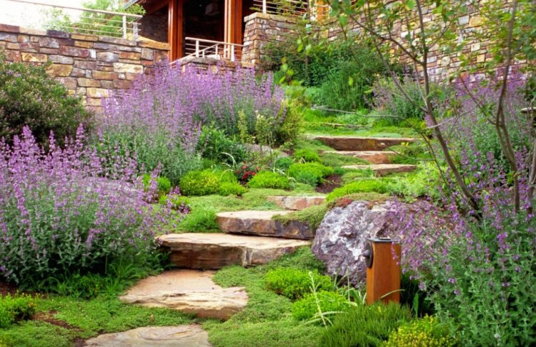 Make Your Backyard More Appealing with Drought Tolerant Landscaping Design 3