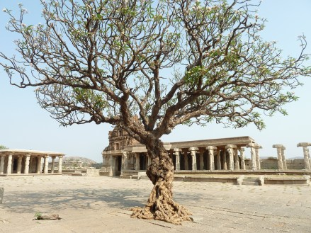 The tree in the temple courtyard.