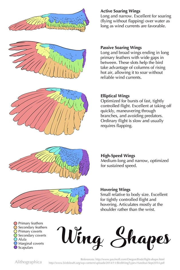 Bird Wing Shapes