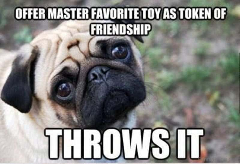 Funniest And Best Dog Memes In The World All Time Ever And Stuff