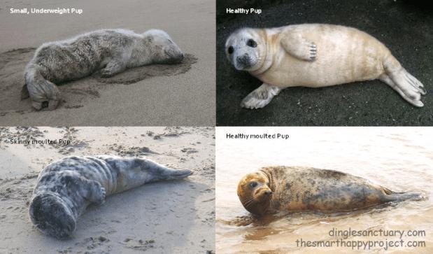 healthy and unhealthy seals