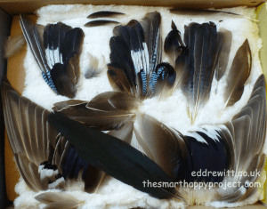 Ed Drewitt's collection of feathers