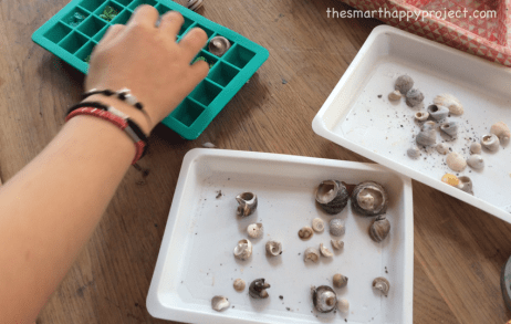 seashell crafts for kids, how to display shells
