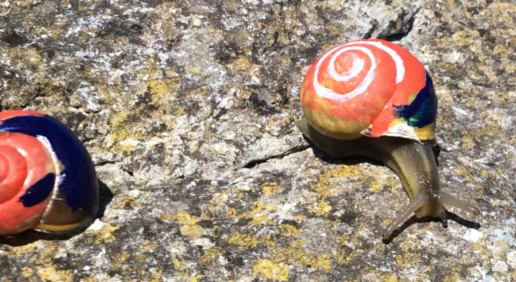 finding the spiral on shells