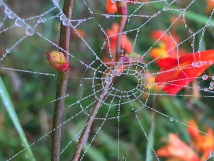 wonder of spiderwebs