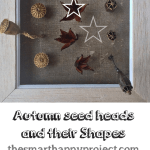 The shapes and numbers of autumn