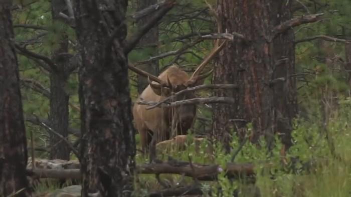 Colorado Elk Hunting