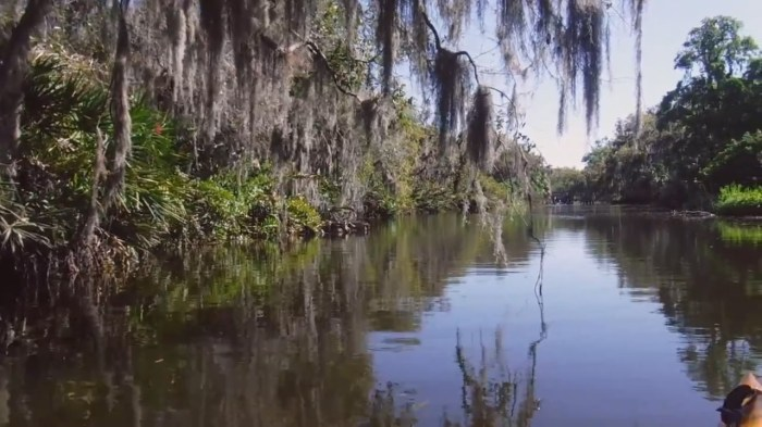 Best Places to Kayak in Florida