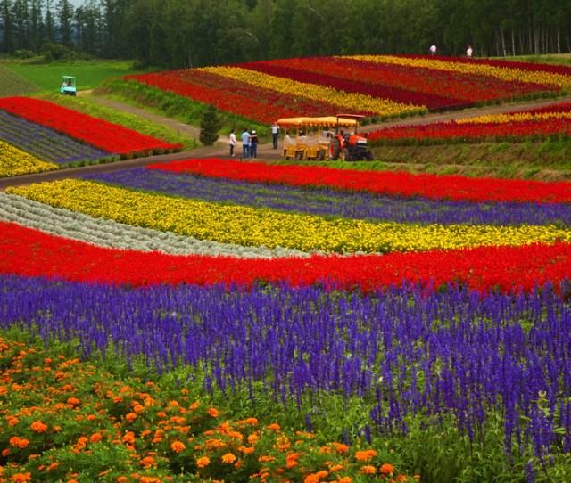 Farm Tomita In Hokkaido Japan