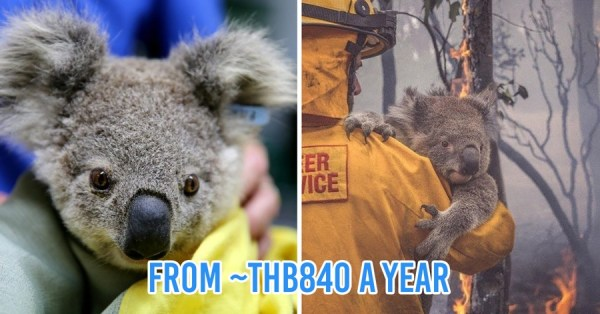 You Can Now Adopt Koalas To Show Your Support During Australia's Raging Bushfires