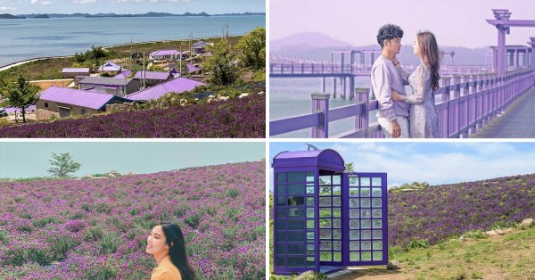 South Korea Has A Magical Purple Island With Lavender Fields & Violet Attractions All Around