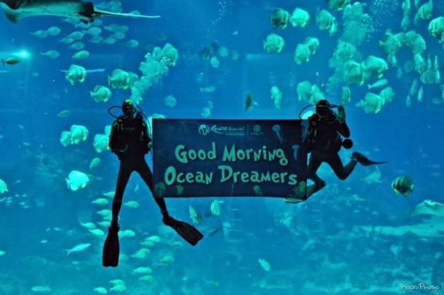 Ocean-Dreams-2.jpg