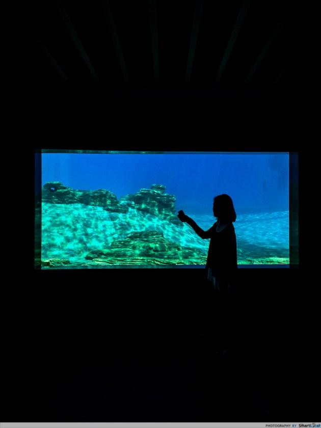 SEA-aquarium-RWS-14.jpg