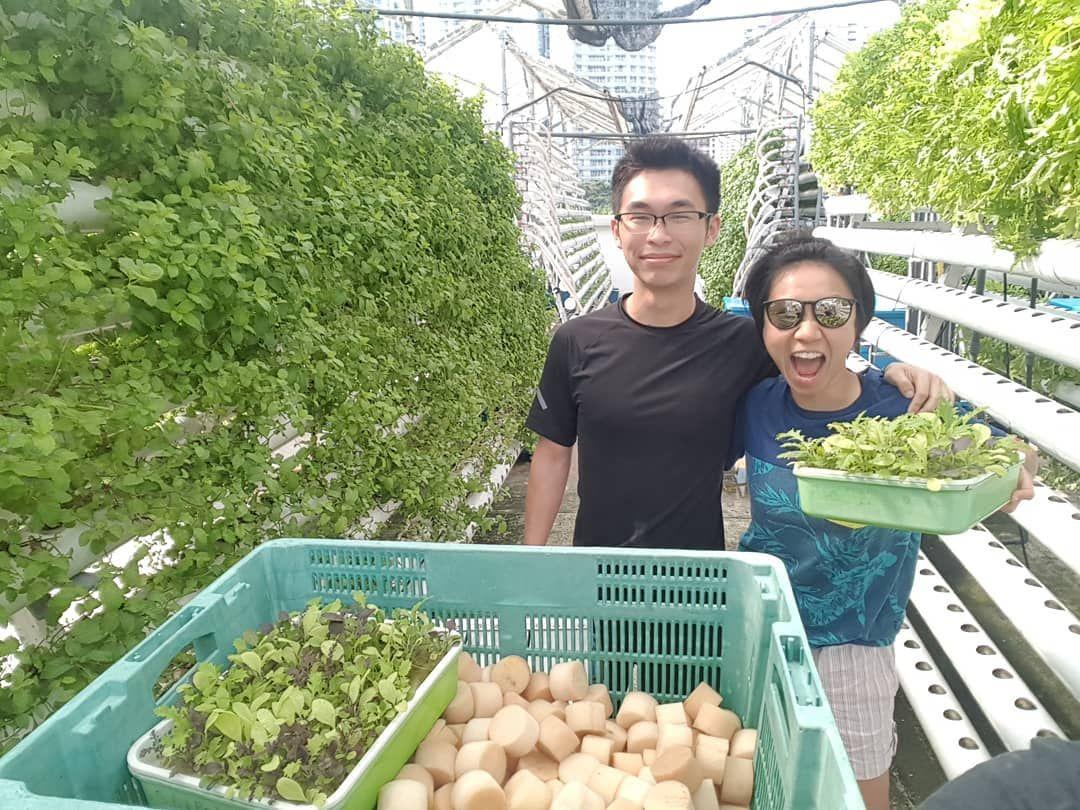 comcrop singapore