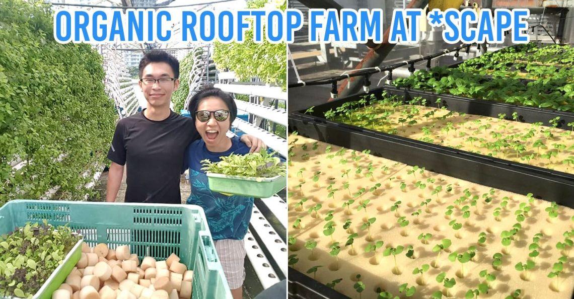 urban farms in singapore scape