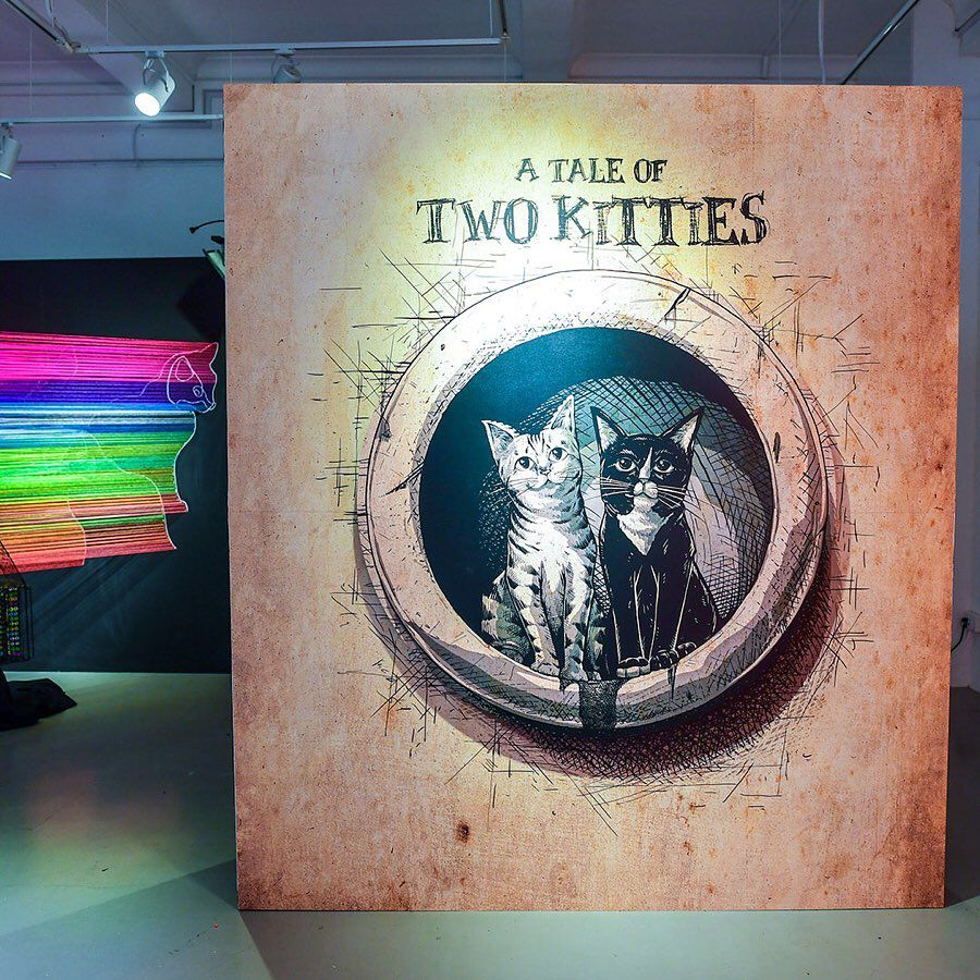 a tale of two kittens cats aliwal arts night crawl