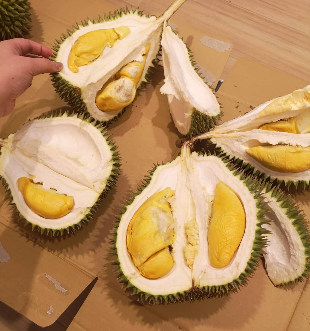 malay words - durian