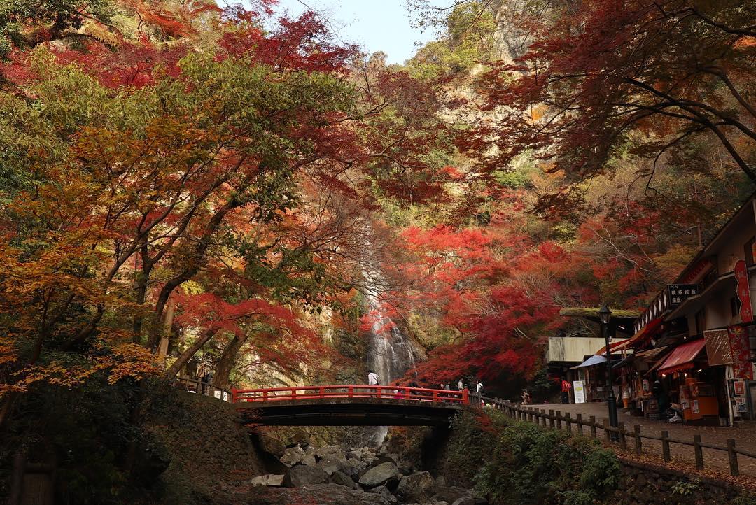 Autumn Japan 2019 osaka