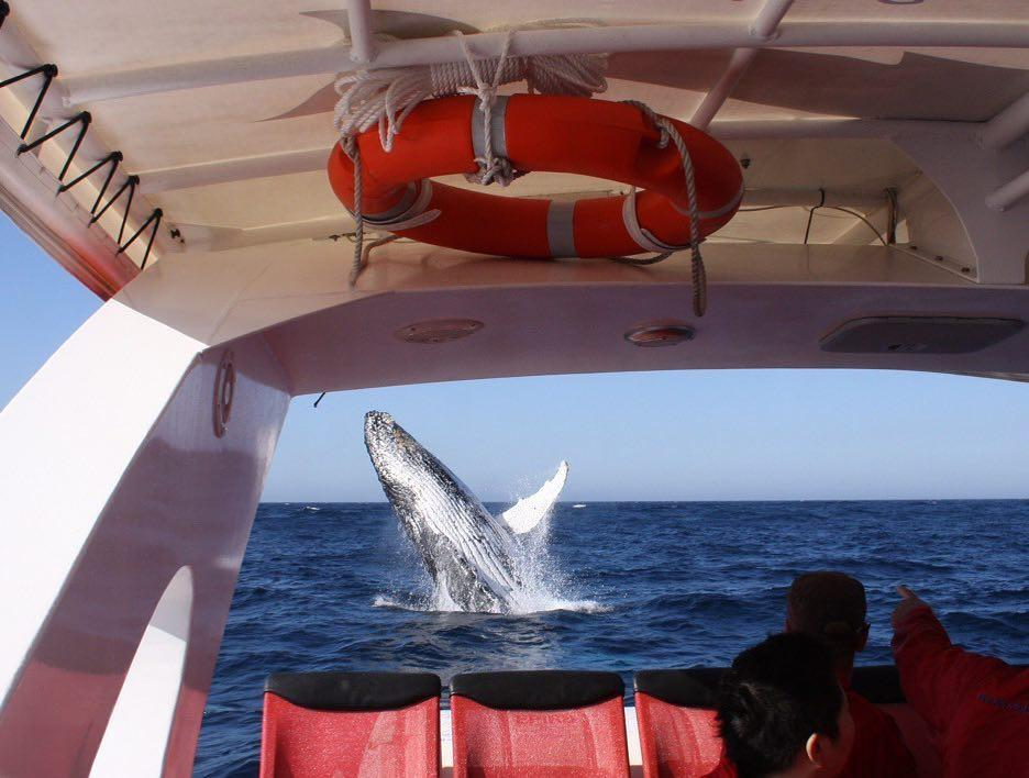 chan brothers sydney nsw humpback whale