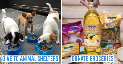 giving week 2019 - collage of animal shelter and groceries
