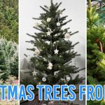 10 Places To Buy Cheap Christmas Trees In Singapore Real Artificial Options From 10