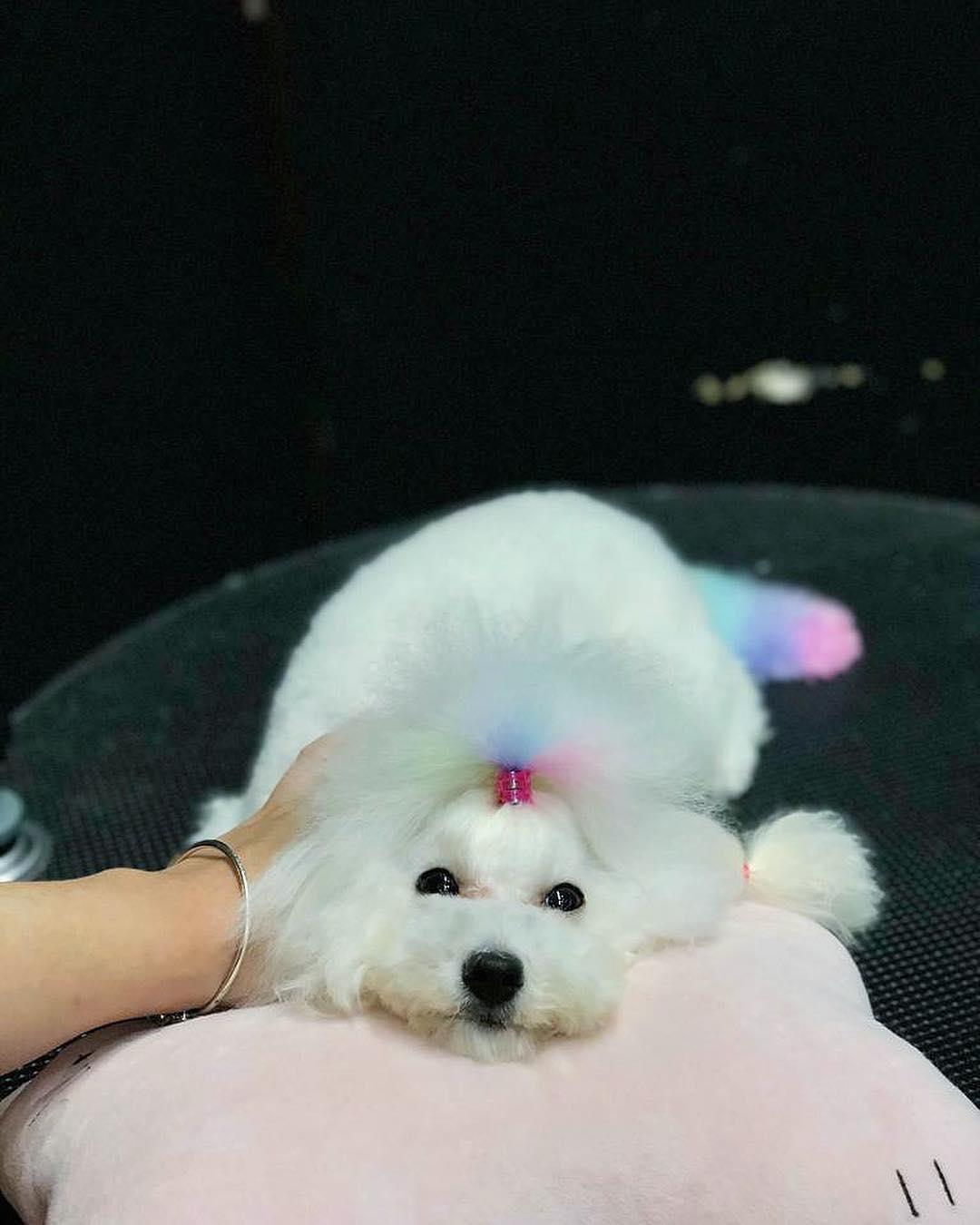 Pet grooming in Singapore - My Pet Image