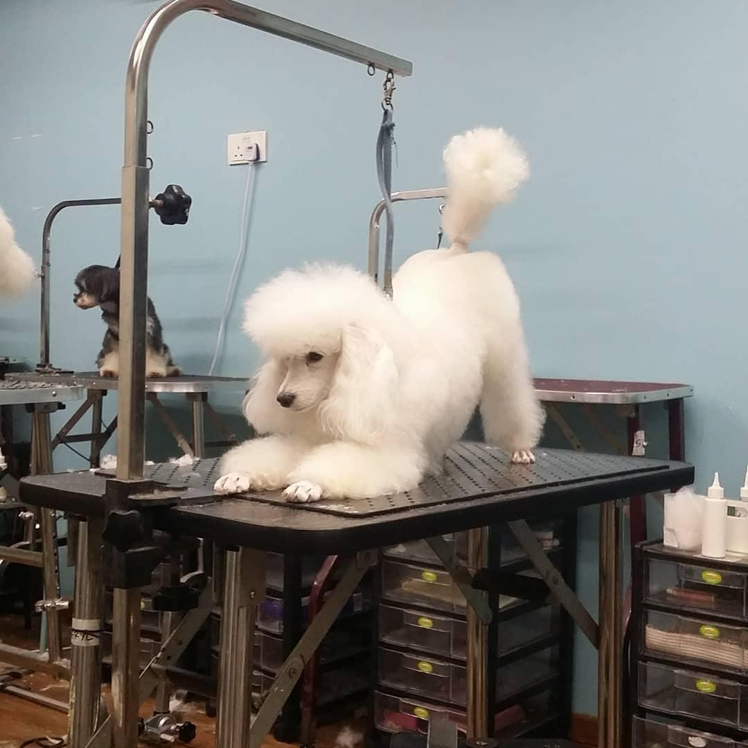 Pet grooming in Singapore - Art of Pets
