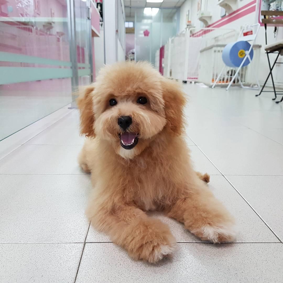 Pet grooming in Singapore - Pet Loft