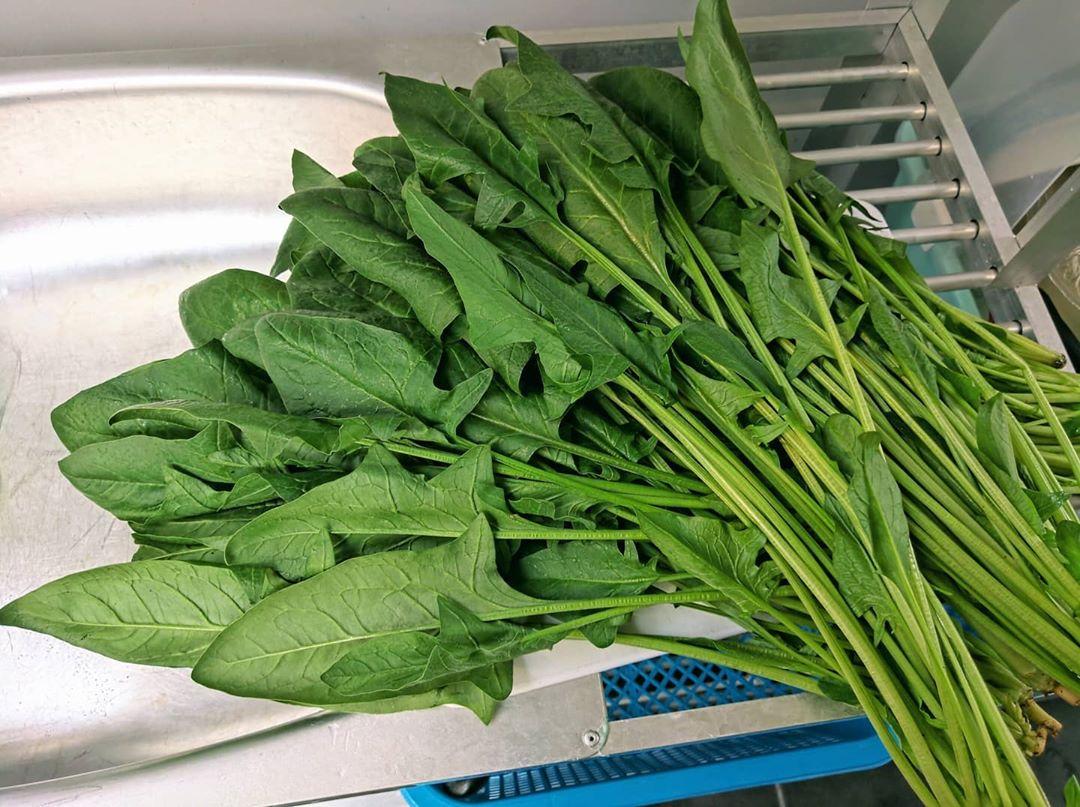 spinach - longest lasting vegetables
