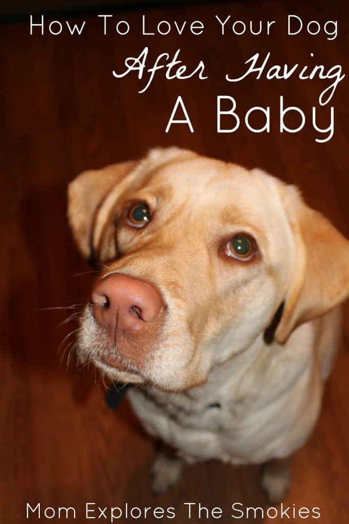 How To Love your Dog After Having A Baby